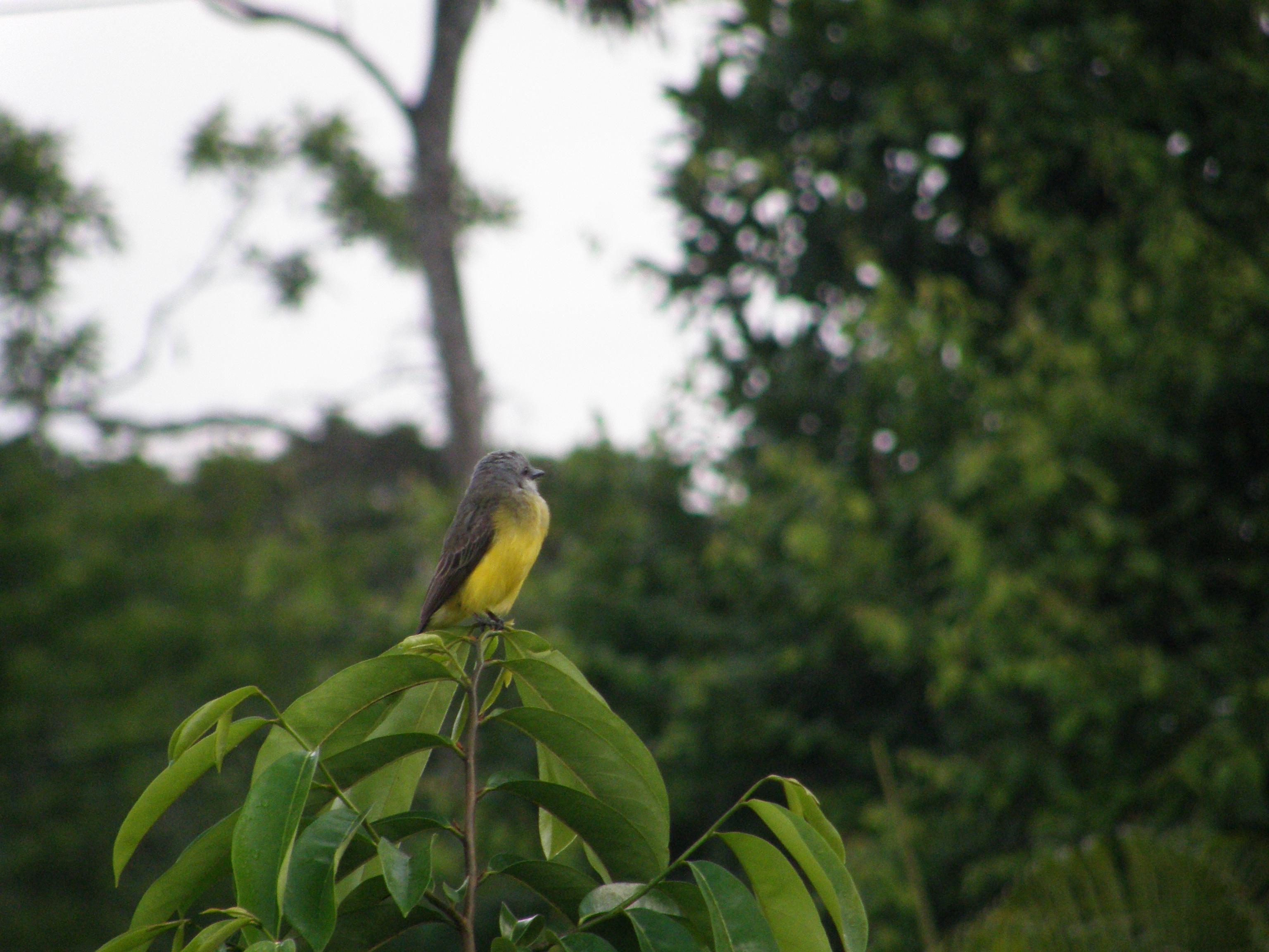 Verde pájaro